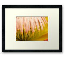 Protea Flower Framed Print