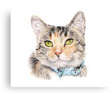 Ari - Rescue Kitten Canvas Print