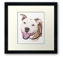 Jango - Staffordshire Bull Terrier Framed Print