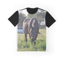 Arabian in the pasture Graphic T-Shirt