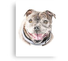 Freddie- Staffordshire Bull Terrier Canvas Print