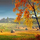 Pasture Meadow by Igor Zenin