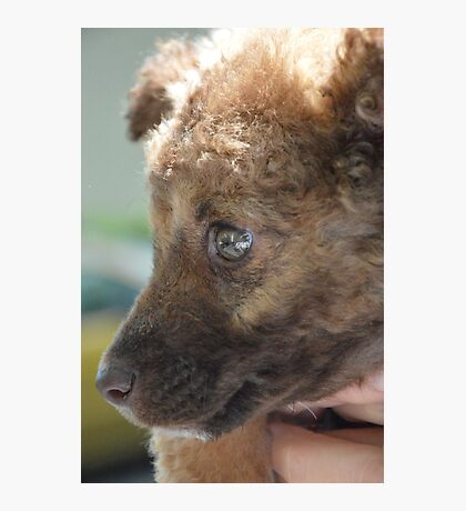 Puppy Bear Photographic Print
