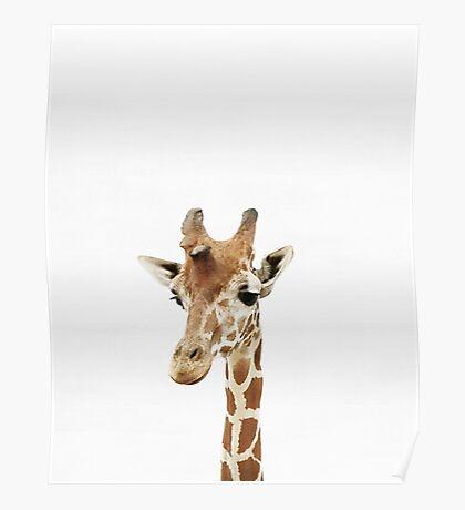 Baby Giraffe, Nursery, Animal, Kids room, Modern art, Wall decor Poster