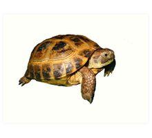 Greek Tortoise Art Print