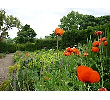 Herbaceous border with poppies, Richmond Castle Photographic Print