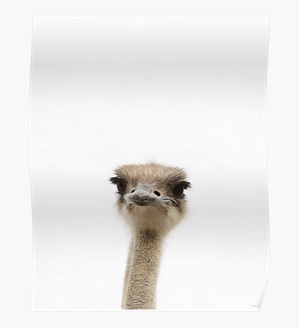 Ostrich print, Nursery decor, Kids room, Minimalist, Bird, Modern art, Wall art Poster