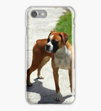Brown and White Dog on a Street iPhone Case/Skin