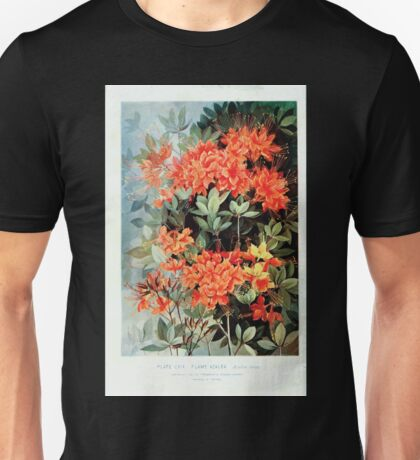 Southern wild flowers and trees together with shrubs vines Alice Lounsberry 1901 001 Flame Azalea Unisex T-Shirt