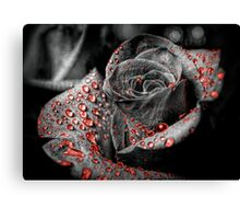 Red drops on Rose Petals Canvas Print