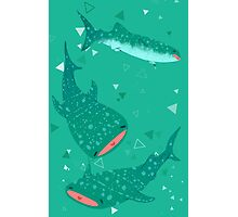 Teal Whale Shark Photographic Print