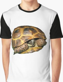 Greek Tortoises in Shell Graphic T-Shirt