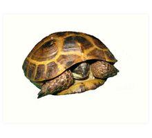 Greek Tortoises in Shell Art Print