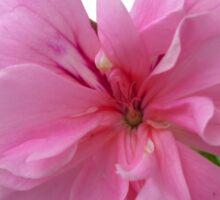Pink geranium  Sticker