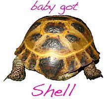 Tortoise - Baby Got Shell Photographic Print