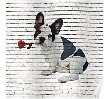 Frenchie Holding Rose Poster