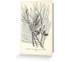 Southern wild flowers and trees together with shrubs vines Alice Lounsberry 1901 039 Cork Wood Greeting Card