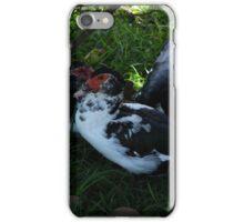 Domestic Ducks Under a Bush iPhone Case/Skin