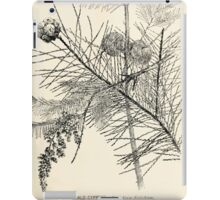 Southern wild flowers and trees together with shrubs vines Alice Lounsberry 1901 006 Bald Cypress iPad Case/Skin