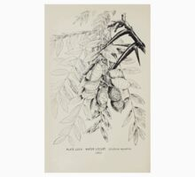 Southern wild flowers and trees together with shrubs vines Alice Lounsberry 1901 079 Water Locust Kids Tee