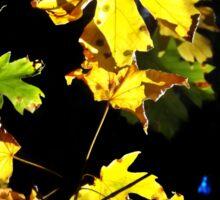 Golden Maple Leaves Sticker