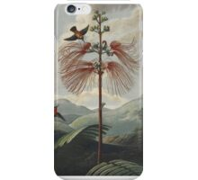 The Temple of Flora iPhone Case/Skin