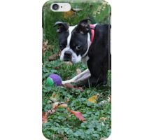 A dog and his ball iPhone Case/Skin