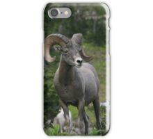 Big Horned Sheep at Glacier National Park iPhone Case/Skin