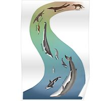Whale evolution - prehistoric and modern whales Poster