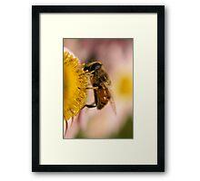 Bee on the flower - super macro Framed Print