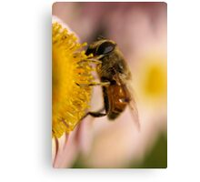 Bee on the flower - super macro Canvas Print