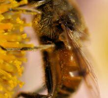 Bee on the flower - super macro Sticker