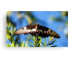 Butterfly (2) Canvas Print