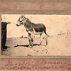 Grandpa's donkey by Vintaged