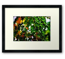 Maple in the Mist Framed Print