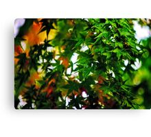 Maple in the Mist Canvas Print