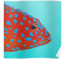 Strawberry Grouper Fish on turquoise Poster