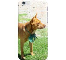 Brown Dog in a Grass Field iPhone Case/Skin