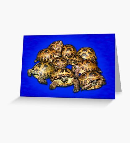 Greek Tortoise Group - Dark Blue Greeting Card