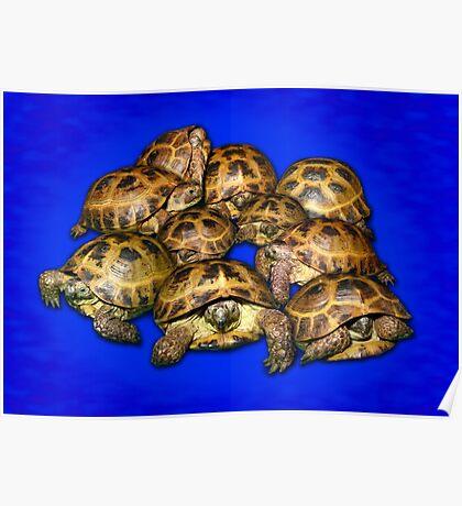 Greek Tortoise Group - Dark Blue Poster