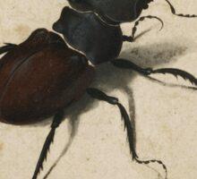 Vintage famous art - Albrecht Durer - Stag Beetle 1505 Sticker