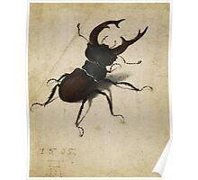 Vintage famous art - Albrecht Durer - Stag Beetle 1505 Poster