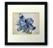 Vintage famous art - Albrecht Durer - Study Of A Lily Framed Print