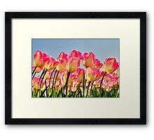 Pink Tulips Bow For The Sun Framed Print