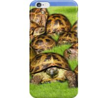 Greek Tortoise Group on Grass Background iPhone Case/Skin