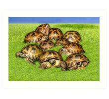 Greek Tortoise Group on Grass Background Art Print