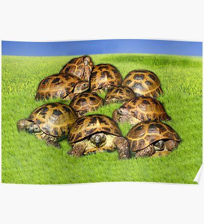 Greek Tortoise Group on Grass Background Poster