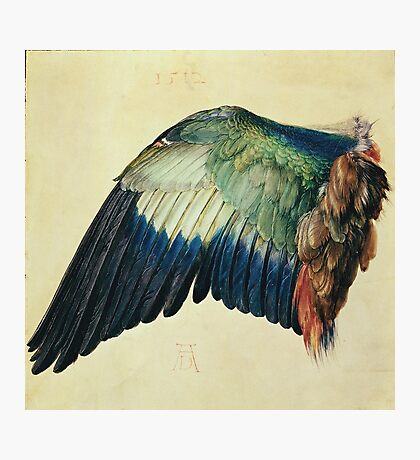 Vintage famous art - Albrecht Durer - Wing Of A Blue Roller Photographic Print