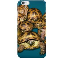 Greek Tortoise Group on Gray-Blue Background iPhone Case/Skin