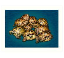 Greek Tortoise Group on Gray-Blue Background Art Print